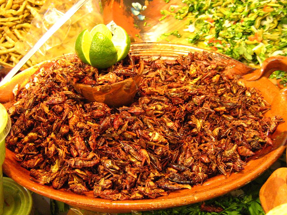Wahaca_Grasshoppers